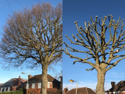 Tree Services Cheshunt - Tree Services and Tree Surgery Cheshunt - CM Garden and Tree Care